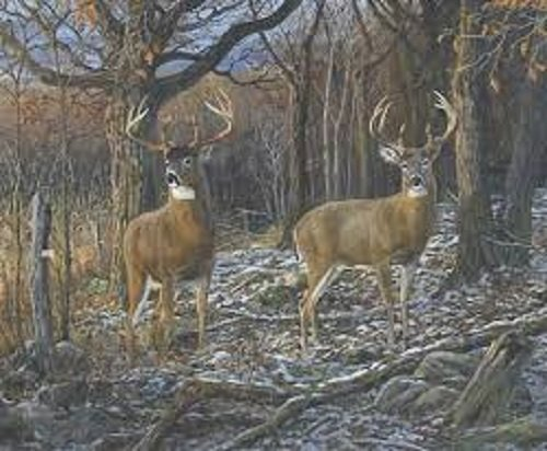 Royal Plush Raschel Throw Pair of Eights Bucks in Woods