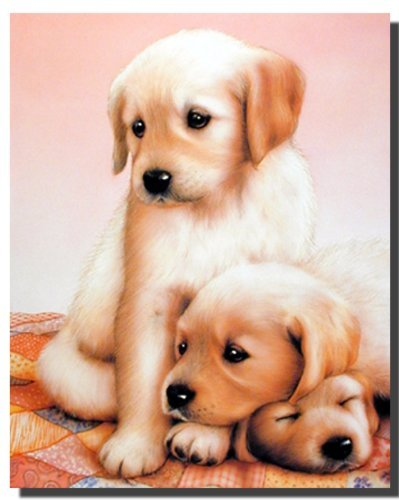 Cute Puppy Dog Poster