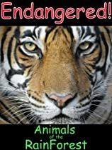 Endangered Animals Of The Rain Forest-A Picture Book For Ages (4-6) (Endangered Animals of the World 1)