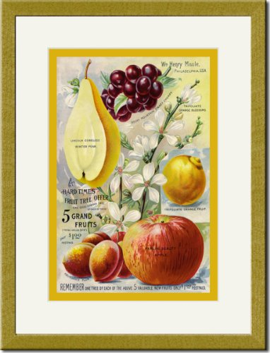 Gold Framed/Matted Print 17x23, 5 Grand Fruits