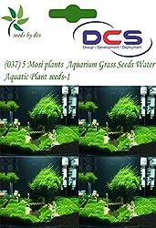 DCS(037) 5 Mosi plants Aquarium Grass Seeds Water Aquatic Plant Seeds-1