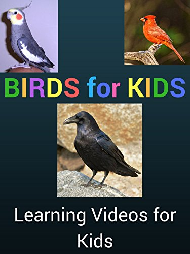 Birds for Kids: Learning Videos for Kids