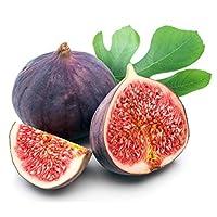 Little Miss Figgy Edible Fig Plant - Ficus carica - Sweet/Dwarf - 4