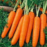 Search : Carrot Scarlet Nantes Certified Organic Heirloom Seeds