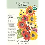Heirloom Sunflower Seeds Flash Blend Certified Organic