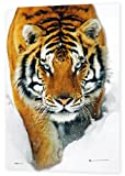 GB eye 3D Poster, Tiger, Snow, 47 x 67cm