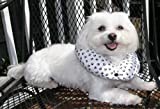 Puppy Bumper - Keep Your Dog on the Safe Side of the Fence -Black & White Paw -10-13