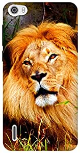 The Racoon Lean magestic lion warm hard plastic printed back case / cover for Huawei Honor 6