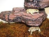 MagNaturals Rock Ledge (Earth, Medium)