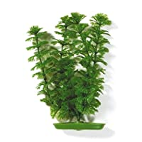 Aquascaper Ambulia Plant Decoration