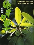 写真集 ゆずり葉