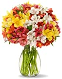 100 Blooms Assorted Peruvian Lilies - With Vase