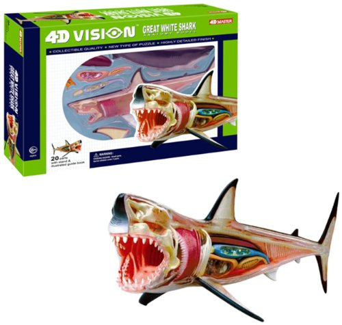 4D Vision Great White Shark Anatomy Model Review