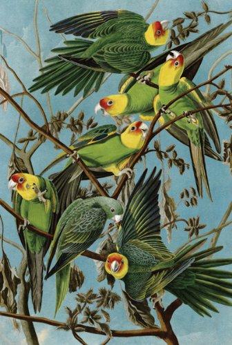 Artifact-Puzzles-Audubon-Carolina-Parakeets-Wooden-Jigsaw-Puzzle