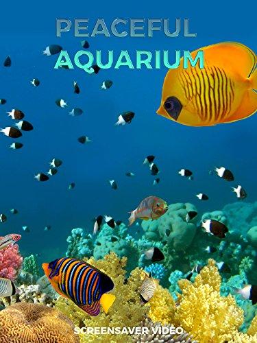 Peaceful Aquarium