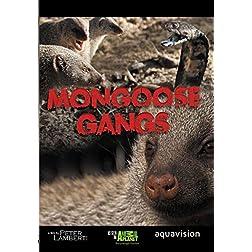 Gangland Killers : Mongoose Gangs