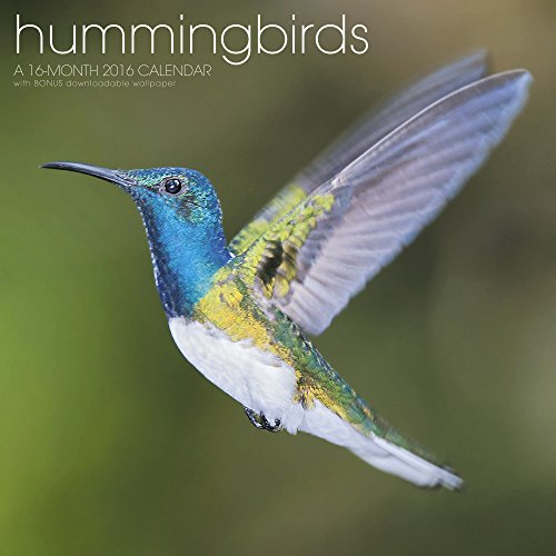 Hummingbirds Wall Calendar (2016)