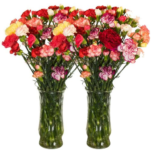 California Mini-Carnations Flower Bouquet - Free Fast Shipping - Double Bouquet - 50 Stems