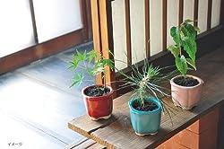 和心盆栽栽培セット もみじ GD-4205