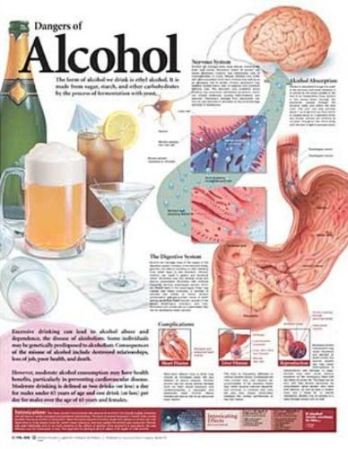 Dangers of Alcohol Anatomical Chart (Nerve Function Chart compare prices)