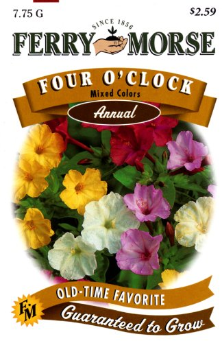 Ferry-Morse 1932 Four O'Clock Flower Seeds, Mixed Colors (7.75 Gram Packet)