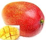 メキシコ産 ケント種 アップルマンゴ  2kg 3~4玉 ランキングお取り寄せ