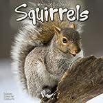 Squirrels  2013 Wall Calendar