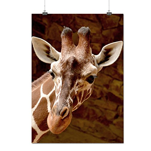 Girafe Visage Regarde africain Matte/Glacé Affiche A0 (119cm x 84cm) | Wellcoda