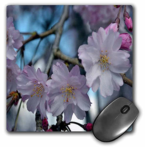 WhiteOak Photography Floral Prints - Cherry Blossom Tree - MousePad (mp_45340_1)