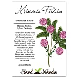 Bulk Package of 1,700 Seeds, Sensitive Plant (Mimosa Pudica) Non-GMO Seeds by Seed Needs