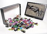 Photo Jigsaw Puzzle of Komodo DRAGONS - ...