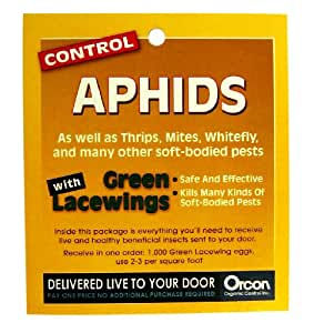 Orcon GL-C1000 Live Green Lacewing Eggs, 1,000 Count (Discontinued by Manufacturer)