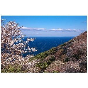 和歌山県 日高郡美浜町 日の岬 日の岬の桜のポストカード葉書はがき Photo by絶景.com