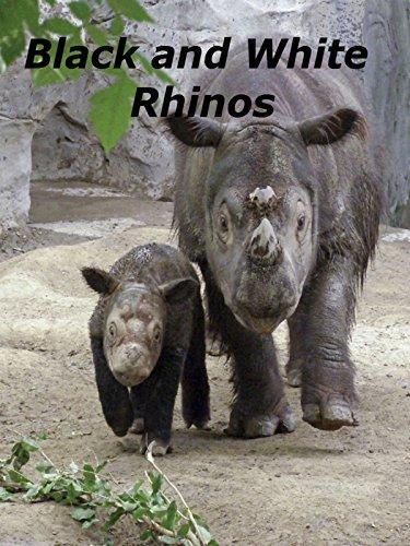 Black and White Rhinos