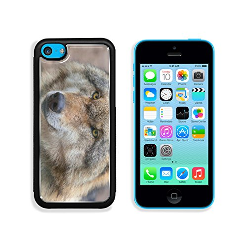 MSD Premium Apple iPhone 5C Aluminum Backplate Bumper Snap Case IMAGE ID: 35171777 Head of a Eurasian Gray Wolf Canis lupus lupus is the most specialised member of the genus Canis as demonstr
