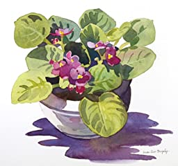 African Violet, Giclee Print of Watercolor Flower Still Life, Showing a Purple Houseplant in a Pot, 9 X 9 Inches