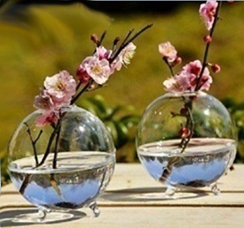 vase boule en verre transparent pour plante fleur hydroponique diy paysage miniature les. Black Bedroom Furniture Sets. Home Design Ideas