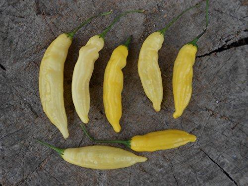lemon-drop-pepper-die-zitronen-chili-mittel-scharf-10-samen