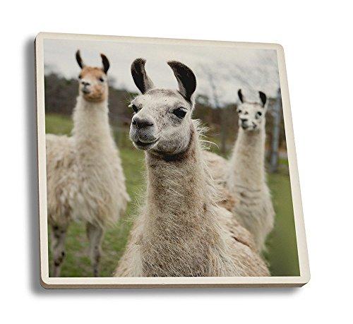 Llamas (Set of 4 Ceramic Coasters - Cork-backed, Absorbent)