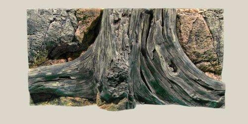 aquarienruckwand-amazonas-60x30cm