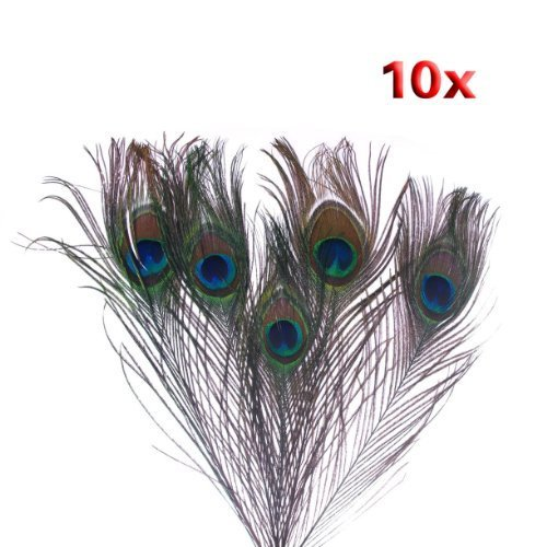 Peacock Feathers - 10pk by CI
