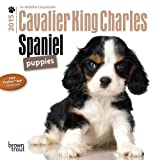 BT Cavalier King Charles Spaniel Puppies 2015 Mini