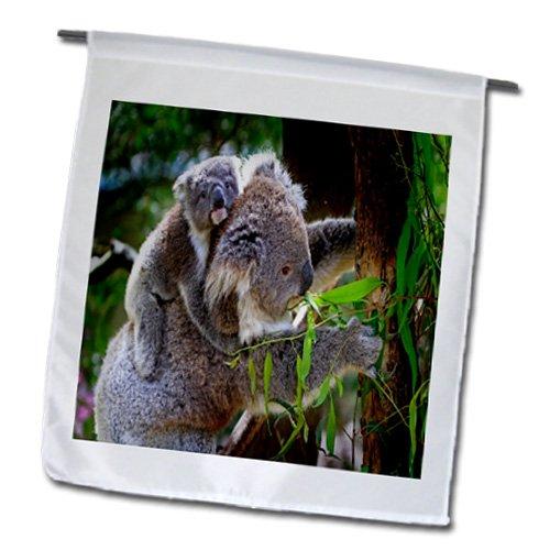 Baby Koala Images front-1047842