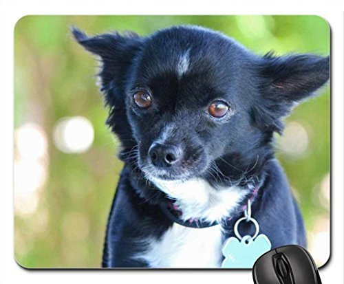I'm Gidget! Take me home! Mouse Pad, Mousepad (Dogs Mouse Pad)