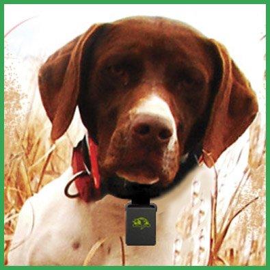Dog Gps Tracking