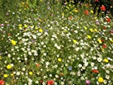 #10: 100% Wildflower Basic meadows seed mix 50 grams. Native UK seed. Covers up to 30 square metres