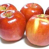 青森県産 紅玉 南部りんご 加工用 完熟 加工用 約5kg