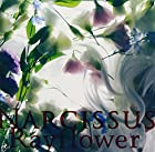 Narcissus(�߸ˤ��ꡣ)
