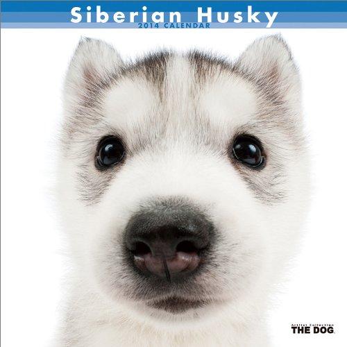 シベリアン・ハスキー カレンダー 2014年 [カレンダー]