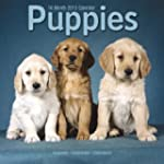 Puppies 2013 Wall Calendar